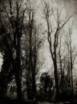The Meadows - 2013 Donna Henderson